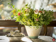 Happy Valentine (bornschein) Tags: flower winter present green home