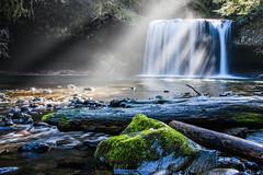 upper_lowview4 (slaphd) Tags: oregon creek forest waterfall stream buttecreek