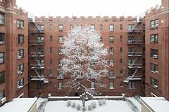 Snowy Courtyard (Zachary Tyler Newton) Tags: nyc newyorkcity newyork brooklyn march unitedstates snowstorm courtyard fireescape apartmentbuilding redbrick crenelations winter2015