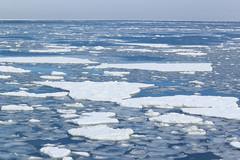 Drift ice /  (yanoks48) Tags: sea japan hokkaido    abashiri   driftice  seaofokhotsk