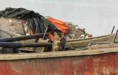 Fishercat - (dals_photography) Tags: naturaleza cats art nature uruguay fishing lakes gatos lagos ports puertos pescadores pescados vidacotidiana josignacio