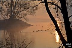 Golden morning (2) (alfvet) Tags: morning water sunrise river ticino alba fiume natura acqua parcodelticino veterinarifotografi