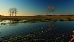 (tozofoto) Tags: travel trees winter sunset sky reflection travelling water colors field canon landscape lights europe hungary shadows waterreflections zala tozofoto