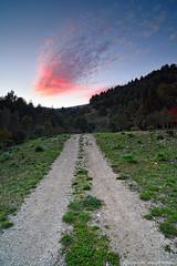 c' una strada nel bosco... (archisal) Tags: sunset red sky italy nature landscape nikon europe italia tramonto explore d750 sicily rosso sicilia paesaggio zf2 distagont2821