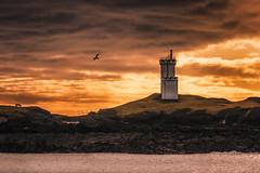Elie Lighthouse (devlin11) Tags: elie lighthouse landscape light exposure scotland fife fishing scenery seaside sunrise sky sea east neuk morning nikon bird