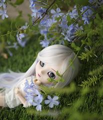 SKY BLUE NANA (*Greenbottle*) Tags: plumbago pullipcelsiy groove junplanning greenbottle greyeyes doll dollphotography fashiondoll pullip