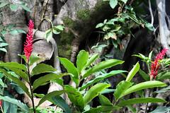 Parque Municipal- Belo Horizonte (Johnny Photofucker) Tags: park parque parco plant tree planta albero rvore parc lightroom pianta parquemunicipal
