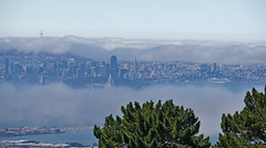From high on a hill (charlottes flowers) Tags: sanfrancisco view fog