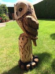 charlies owl web 1
