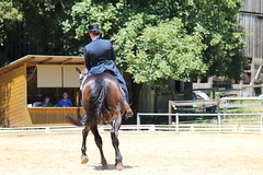 IMG_5127 (dreiwn) Tags: horse pony horseshow pferde pferd equestrian horseback reiten horseriding dressage reitturnier dressur reitsport dressyr dressuur ridingclub ridingarena pferdesport reitplatz reitverein dressurreiten dressurpferd dressurprfung tamronsp70200f28divcusd jugentturnier
