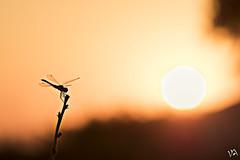 Nimbo (:) vicky) Tags: sunset summer sol valencia contraluz spain flickr olympus liblula vicky backlighting resplandor visionario nimbo olympusdigitalcamera igersvalencia igerscomunitat lovesvalencia vickyepla flickrvicky matchvalencia estaesvalencia