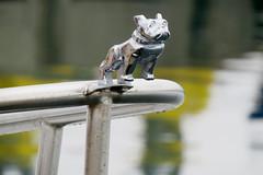 Bulldog on the bow of a fishing boat in Sainte-Thrse-de-Gasp (Ullysses) Tags: bulldog fishingboat bow gaspesie qubec canada summer t bateaudepeche saintethrsedegasp havre port