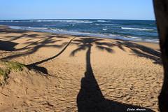 Sombras (Carlos Amorim (Camorim10)) Tags: tarde entardecer taipu de fora pennsula mara bahia brasil coqueiros praia mar azul sol