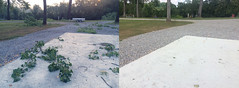 Before and after (bigberry.eu) Tags: storm resort nature beforeafter