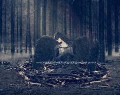 Broken (amarvel) Tags: blackbird wing forest fire burnt burn broken nest