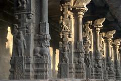 Rows of pillars (VinayakH) Tags: temple jalakandeswarartemple tamilnadu vellore india hindu religious shiva vijayanagaraempire