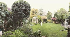 "6 hours of trimming done in this long garden today. 3 boundary hedges and most shrubs and trees in the garden ! The new battery hedge trimmers made it a pleasure! #wardenstreecare <a style=""margin-left:10px; font-size:0.8em;"" href=""http://www.flickr.com/photos/137723818@N08/29757454544/"" target=""_blank"">@flickr</a>"