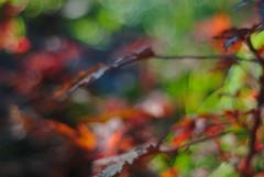 DSC_0004 (criscrot) Tags: parcsaintemarie nancy lorraine bokeh colors d200 50mm18 automne autumn couleurs