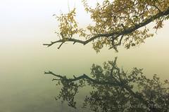 DSC08571_s (AndiP66) Tags: graben bern schweiz ch berken aare fog nebel autumn herbst light licht morning morgen river fluss water wasser reflections spiegelungen kantonbern cantonberne switzerland sony sonyalpha 7markii 7ii 7m2 a7ii alpha ilce7m2 sonyfe2870mmf3556oss fe 2870mm sel2870 emount f3556 kitlens andreaspeters oberaargau
