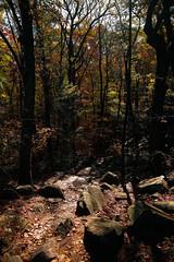 7Q7A6213 (armincreates) Tags: nature fall colors trees lake mountains hike dog puppy beauty trail panorama sunset cows farm wisconsin illinois usa walk