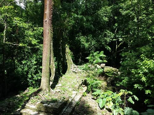Dschungel-Ruinen