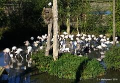 Roze Flamingo's (ditmaliepaard) Tags: rozeflamingos safaripark beeksebergen hilvarenbeek a6000 sony