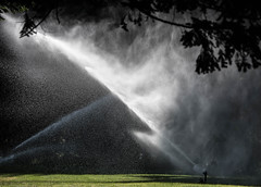 Making it Rain (maytag97) Tags: maytag97 contrast outdoor sprinkler spray grass green shade water mist tamron 150600 150 600