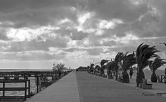 Dciles al viento (Fotgrafo-robby25) Tags: byn fujifilmxt1 marmenor nubes paseomartimo viento