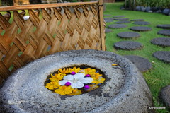 DSC06362 (Peripatete) Tags: bali canggu resort beach desaseni nature flowers fullmoon culture tradition architecture food