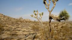 Burned some gas in my day. (Matt Jalbert) Tags: joshuatree antelopevalley california southerncalifornia losangelescounty desert mojavedesert rockybuttes