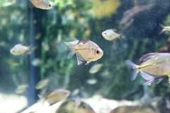 IMG_5671 (godpasta) Tags: newportaquarium kentucky newport aquarium