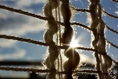 Macro Monday Backlit : Eclat de soleil en zig-zag (Tiolu.) Tags: macromonday backlit lumire soleil