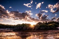 Mangrove sunset (Richard Mart1n) Tags: mangrove sunset travel beach ocean landscape awesome nikon d5000 sun clouds abstract art
