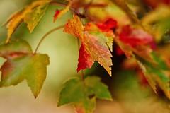 _DSC2574 (BrettGV) Tags: autumn sonnart18135