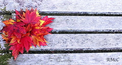 An Autumn Bouquet (Rob McC) Tags: abstract autumn fall autumnal bouquet bench leaves acer