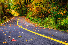 Autumn road III (le cabri) Tags: autumn falling footpath road doublelaneroad leaf street america canada quebec tree day outdoors tranquilscene ruralstreet lushfoliage nature nonurbanscene horizontal forest season fall mapletree photography sidewalk coloredleaves colors red orange yellow