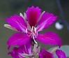 ROKTO Kanchon (AnEeSA LiSsi) Tags: flower pick hobigonj admin kanchan framebangladeshaward hotelgreenplanetpalace
