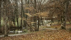 r e f u g e (MRZ-PHOTOGRAPHY) Tags: life park wood bridge autumn trees lake france nature water leaves relax landscape photography focus place path think bio calm fallen quit refuge limoges