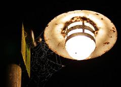 Spinne in der Nacht... (gutlaunefotos ☮) Tags: lampe nacht laterne spinnennetz strasenlampe