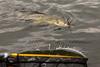 Portmore09Oct14_7282 (Cap'n Fishy) Tags: scotland pike pikefishing