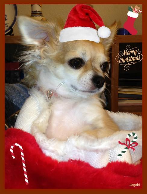 Joyeux Noël à tous mes Amis Flickr