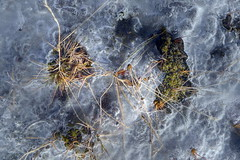 iceland - under the ice (valeriadalua) Tags: plants snow ice nature reeds landscape island frozen iceland moss earth roadtrip lichen whatliesbeneath