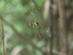 Spider in Khao Yai Park