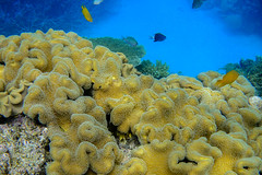 DSC02734.jpg (Raul Wong Roa) Tags: life travel marine underwater australia queensland snorkelling cairns reef greatbarrierreef corals oceania
