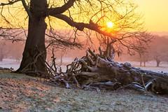 Richmond Park Sunrise (paulinuk99999 (lback to photography at last!)) Tags: park london sunrise richmond autofocus paulinuk99999