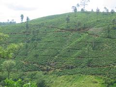 Terraced Hillside Sri Lanka