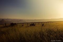 Ao amanhecer (Gilda Tonello) Tags: campo amanhecer mineirosdotiet