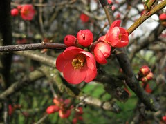 venti giorni prima della primavera - twenty days before the spring (ermenegildore) Tags: flowers primavera colors spring c fiori colori