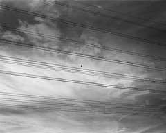 different kind of cage (itawtitaw) Tags: above autumn light sky cloud white black bird 120 mamiya film nature lines silhouette contrast analog mediumformat blackwhite solitude glow bright snapshot scan lookup cables epson sw hp5 shape schwarzweiss ilford 80mm v700 mamiya7ii