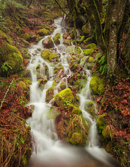 Waterfall at Staircase (G.Powers Photography) Tags: moss natural nikon serene nature staircase nikond7100 nikon18105 longexposure rocks lakecushman colorful beautiful outside stream peaceful blended outdoors green pacificnorthwest fern washington waterfall